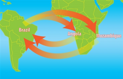 Graphic shows distance covered between Brazil and Africa