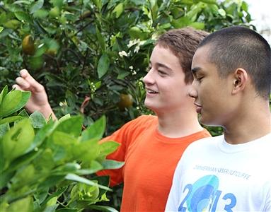 Young volunteers in Backyard Citrus Drive 2014