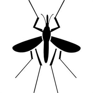 Mosquito graphic