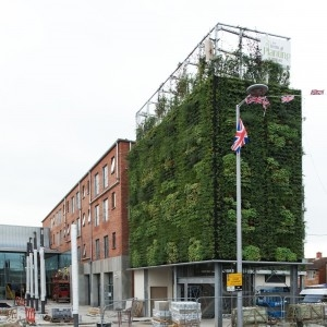 Photo of vertical green wall of Skainos Center